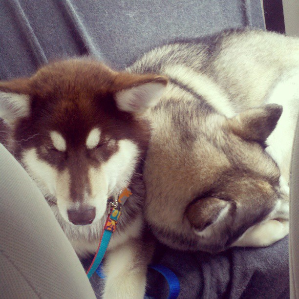 The goal? Sleepy pups.