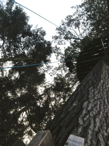 Rappelling down from one of the many tree stands.