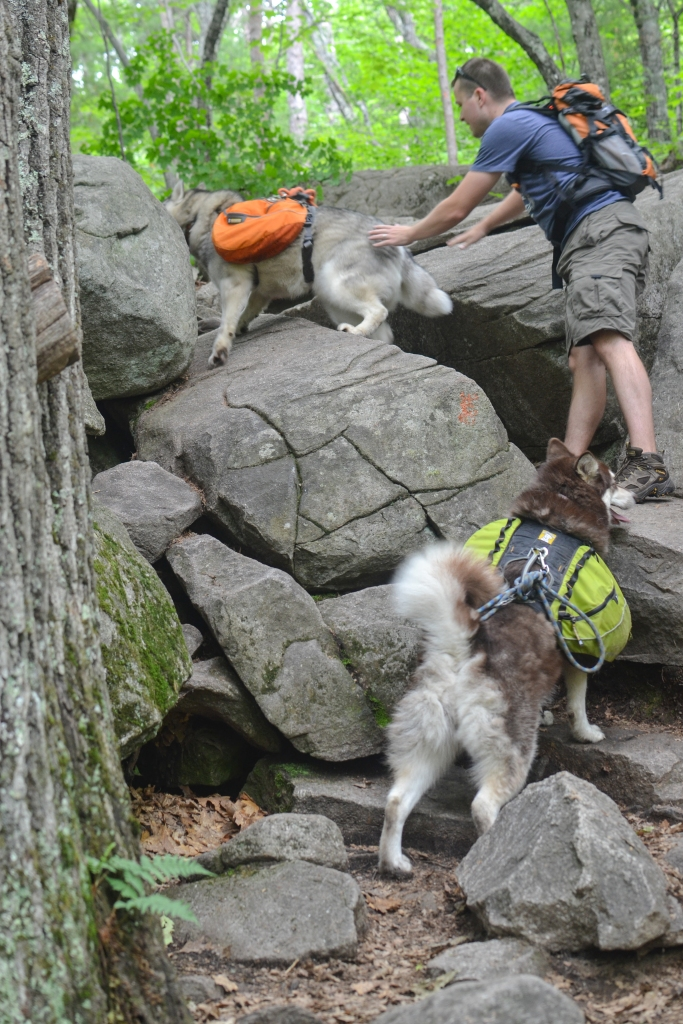Rob helping Yuri and Kina up a more difficult section of Boulder Loop Trail. Can I just say how proud I am of these two furry children of mine for knowing hiking commands better than anything else?