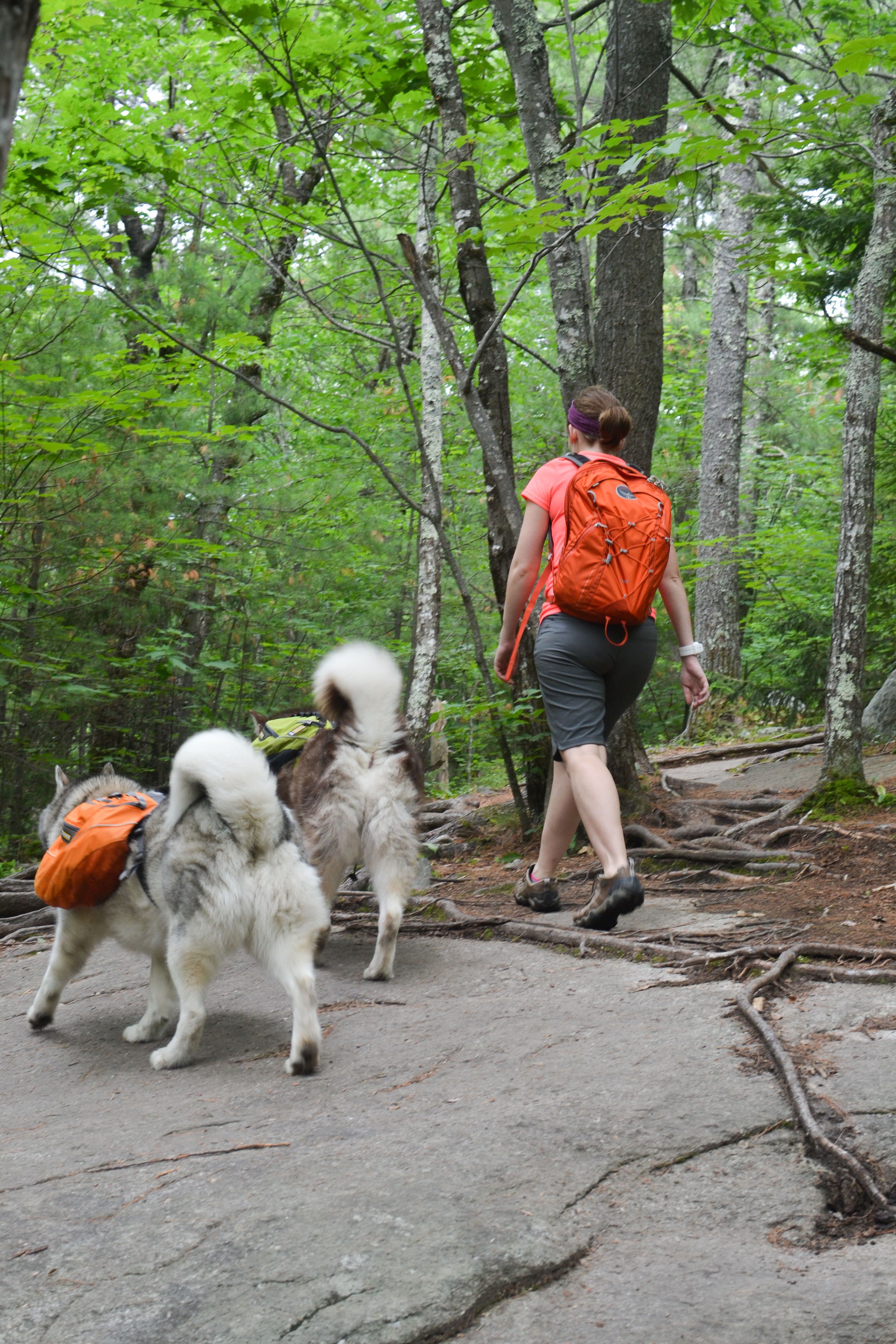 hiking with dogs mount major alton nh tails from the trails. Black Bedroom Furniture Sets. Home Design Ideas
